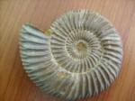 hélice spiralée